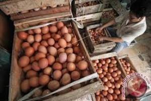 Persediaan Banyak Harga Telur Relatif Turun