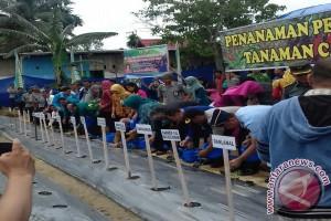 Gubernur Canangkan Gerakan Tanam Cabai di Kendari