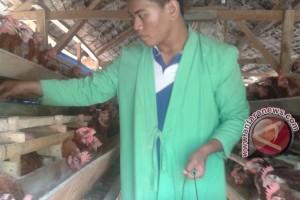Kendari Dorong Warga Kembangkan Peternakan Ayam