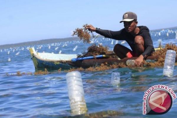 Wakatobi Butuh Balai Benih Rumput Laut