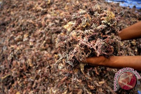 Wakatobi Butuh Industri Pengolahan Rumput Laut