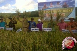 Kabupaten Konawe Dukung Asuransi Usaha Tani
