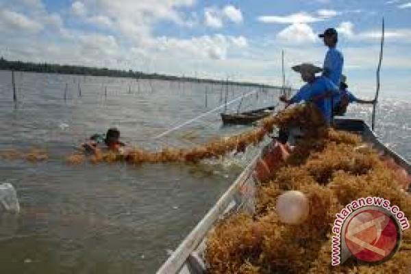 Anggota DPRD Imbau Nelayan Kembangkan Rumput Laut