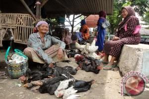Permintaan Daging Ayam Meningkat Jelang Ramadhan