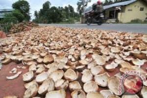 Petani Kelapa Sambut Gembira Kenaikan Harga Kopra