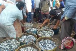 Harga Ikan Kering di Kendari Masih Tinggi