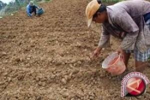 Perbaiki Struktur Tanah, Kolaka Kerja Sama dengan Loponik