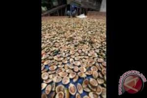 Harga Pinang Kupas di Kendari Rp10.000/Kg
