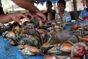Produksi Kepiting Bakau di Kendari 40 Ton/Tahun
