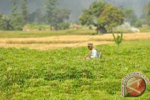 Buton Utara Siapkan 5.000 Hektare Pertanian Organik