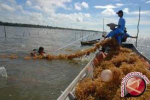 Konawe Kepulauan Mengajak Pengusaha Mengembangkan Rumput Laut