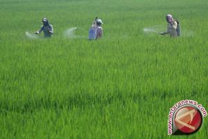 Pengelola Asuransi Pertanian Diminta Serius Lakukan Sosialisasi
