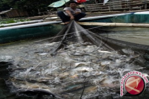 Teluk Lasongko dijadikan kawasan budi daya ikan
