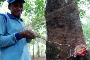 Perusahaan perkebunan karet bina petani
