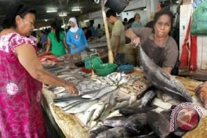 SEAFDEC riset ikan belida temukan metode budidaya