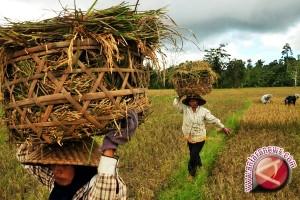 Musi Banyuasin targetkan swasembada pangan 2017