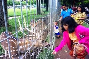 Hukuman yang pantas untuk orang usil pencekok miras pada hewan