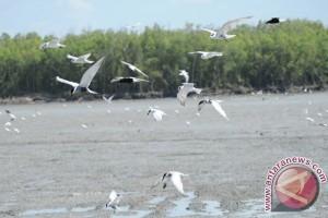Burung Dara Laut