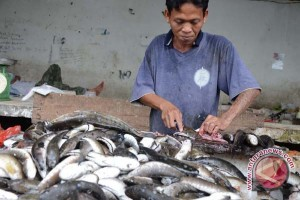Kebun sawit berdampak terhadap produksi ikan gabus