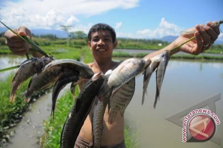 Menangkap Ikan Besar Adu Kebolehan Menangkap Ikan