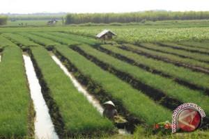 Penggunaan lahan pertanian di Palembang belum optimal