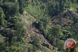 Dinas Kehutanan laporkan PNS rambah hutan lindung