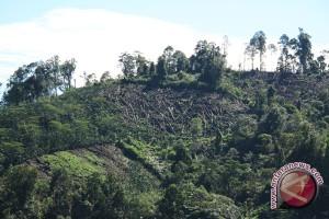 Kerusakan hutan TNKS Sumsel memprihatinkan