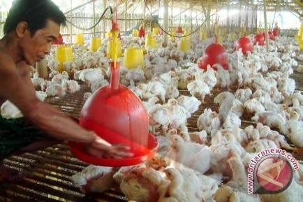 Pemkot berikan bantuan ribuan bibit ayam ternak