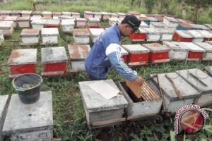 Produksi madu di Lombok Utara anjlok