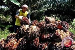 Dua pabrik kelapa sawit di Mukomuko dapat peringkat merah