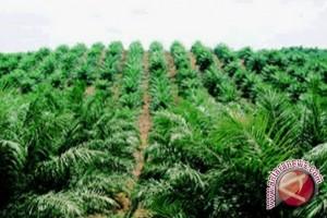 Pencurian kelapa sawit marak di Mukomuko