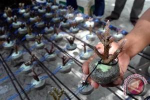 Terumbu buatan ditanam di Pulau tikus Bengkulu