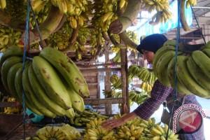 Warga Palembang gemari pisang kepok