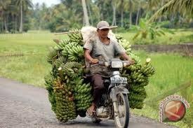 Pedagang buah pisang selama Ramadhan laris
