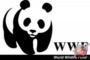 WWF: Kritisi kondis hutan gambut londerang Jambi