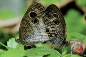 Objek wisata Kandi dilengkapi taman kupu-kupu