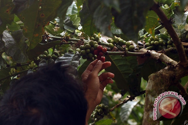Wagub Sumsel minta masyarakat promosikan kopi daerah
