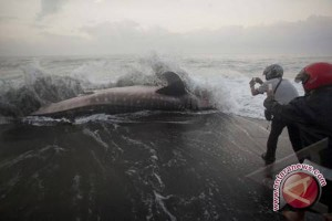 Teror hiu di dunia layar lebar