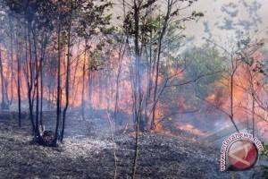 Greenpeace soroti intimidasi terhadap kasus kebakaran lahan
