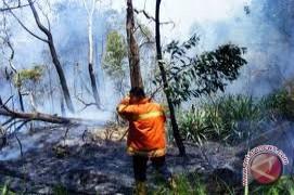 Polda kembangkan kasus pembakaran hutan
