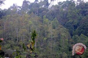 APP luncurkan program perlindungan hutan 500 desa