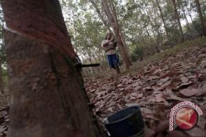 Petani Karet Ogan Komering Ulu lesu akibat harga turun