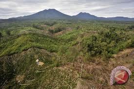 4.095 hektare hutan KEL hilang sepanjang 2016