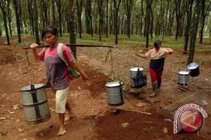 Pemkab Musi Banyuasin tingkatkan keterampilan petani karet