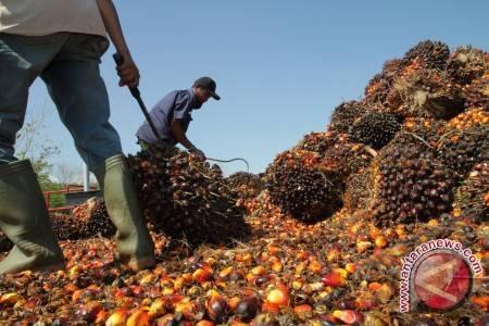 Mendag jamin sawit Indonesia terbaik di dunia