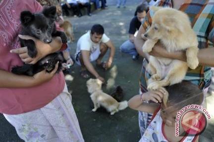Dinas Kesehatan karantina anjing diduga rabies gara-gara gigit warga