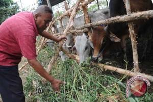 Pedagang hewan kurban mulai bermunculan di Palembang