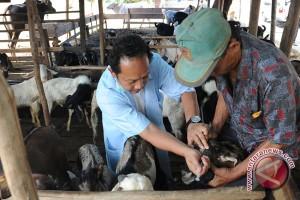 Warga Palembang diingatkan beli sapi bersurat