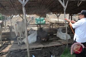 Hewan Kurban di Baturaja hasil peternak lokal