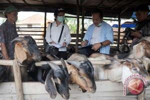 Pemkot Palembang sosialisasi pemotongan hewan kurban